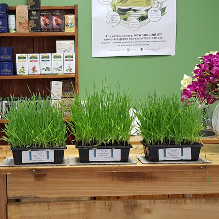 wheatgrass-trays-available-in-healthy-times-shop